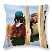 Wood Duck In The Reeds Throw Pillow