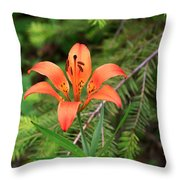 Wood Lily Also Called Prairie Lily Or Western Red Lily Throw Pillow