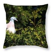 Wood Pigeon Throw Pillow