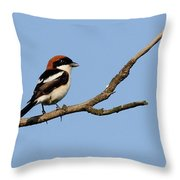 Woodchat Shrike  Throw Pillow