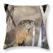 Woodchuck Throw Pillow