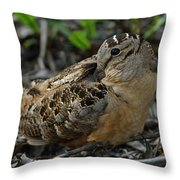 Woodcock At Rest Throw Pillow