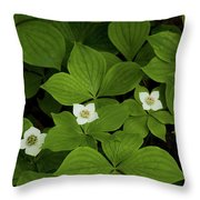 Woodland Bunchberry Blossoms Throw Pillow