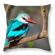 Woodland Kingfisher Halcyon Throw Pillow