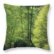 Woodland View With Stream, Sachsische Throw Pillow