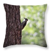 Woodpecker In New Mexico Throw Pillow