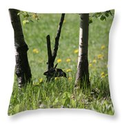 Woodpecker Snack Time Throw Pillow