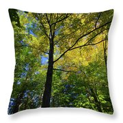 Woods In Nh Throw Pillow
