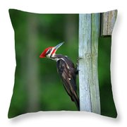 Woody Woodpecker Throw Pillow
