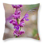 Woolly Blue Curls In Rancho Santa Ana Botanic Garden In Claremont-california  Throw Pillow