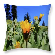 Woolly Mule's-ear At Lassen Park Throw Pillow