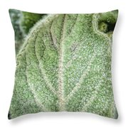 Wooly Mules Ear Throw Pillow
