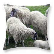 Wooly Times Throw Pillow