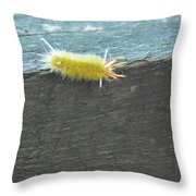 Wooly Worm In Shiloh, Tn Throw Pillow