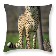 World's Fastest Land Animal Throw Pillow