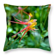 Wp Floral Study 3 2014 Throw Pillow