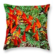 Wp Floral Study 6 2014 Throw Pillow