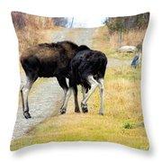 Amorous Moose Wrestling Throw Pillow