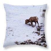 Wyoming Big Horn Throw Pillow