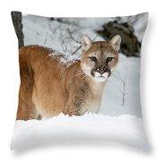 Wyoming Wild Cat Throw Pillow