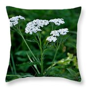 Yarrow Flowerheads Throw Pillow