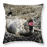 Yawning Harbor Seal - Oregon Coast Throw Pillow