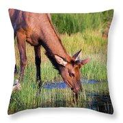 Yearling Elk Throw Pillow