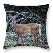 Yearling Fawn Throw Pillow