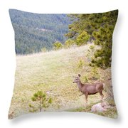 Yearling Mule Deer In The Pike National Forest Throw Pillow