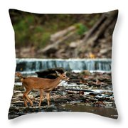 Yearling On Indian Creek Throw Pillow