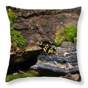 Yellow And Black Dart Frog Throw Pillow