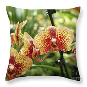 Yellow And Red Spotted Phalaenopsis Orchids Throw Pillow