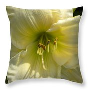 Yellow And White Daylily Throw Pillow