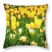Yellow And White Tulips In Canberra In Spring Throw Pillow