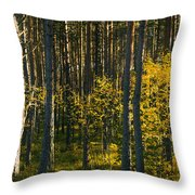 Yellow Autumn Trees In Forest Throw Pillow