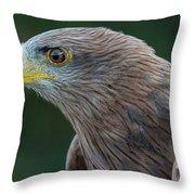 Yellow-beaked Kite Throw Pillow