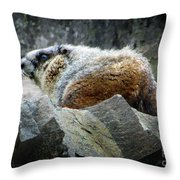 Yellow Bellied Marmot - Glacier National Park Throw Pillow