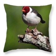 Yellow-billed Cardinal Throw Pillow
