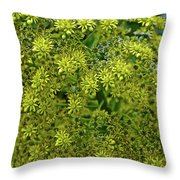 Yellow Blossoms Of Green Aeonium In Huntington Desert Garden In San Marino-california  Throw Pillow