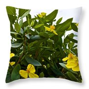 Yellow Poppy Bush Flowers At Pilgrim Place In Claremont-california Throw Pillow