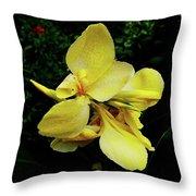 Yellow Canna  Throw Pillow
