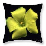 Yellow Clover Flower Throw Pillow