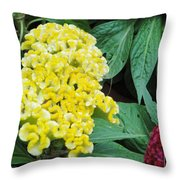 Yellow Cockscomb Throw Pillow