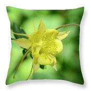 Yellow Columbine  Throw Pillow