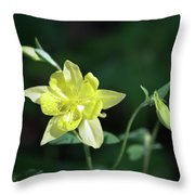 Yellow Columbine Squared Throw Pillow