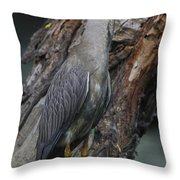 Yellow Crested Night Heron On Log Throw Pillow
