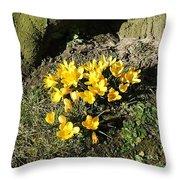 Yellow Crocus 1 Throw Pillow