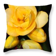 Yellow Crocus Closeup Throw Pillow