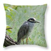 Yellow-crowned Night Heron 1 Throw Pillow