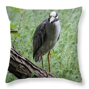 Yellow-crowned Night Heron 2 Throw Pillow